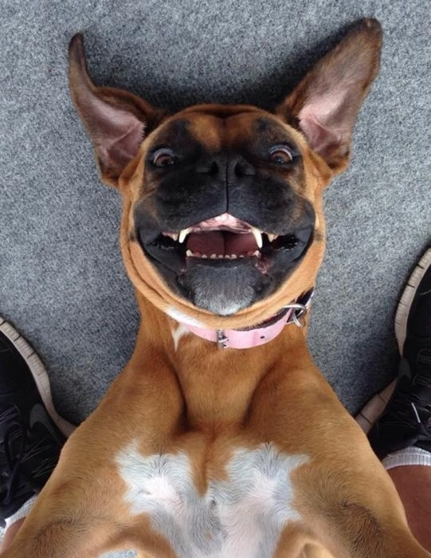 pets clicking selfies