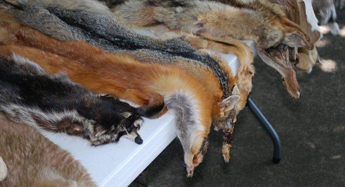 Fur Ban